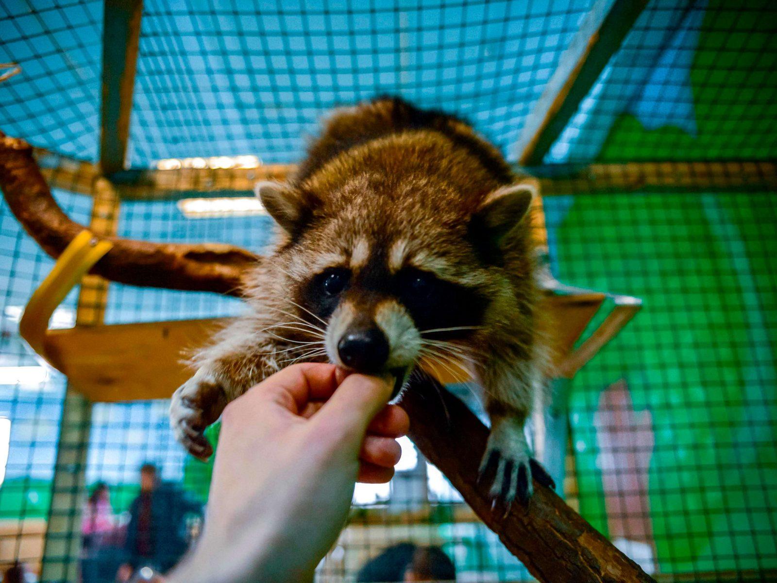 Фото проведения тимбилдинга по программе Контактный зоопарк от Red-G